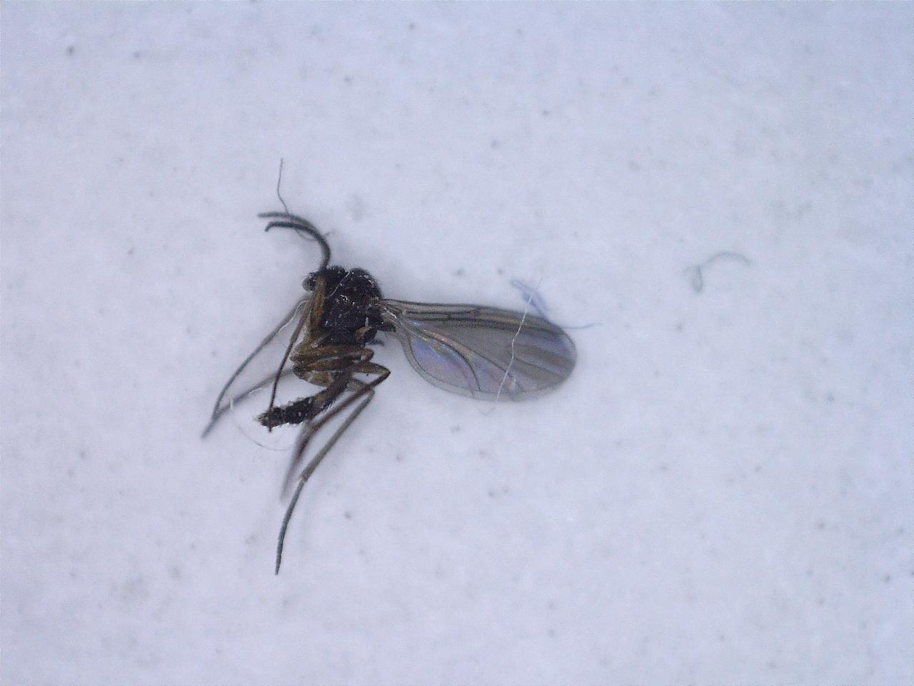 Bugs Around My House